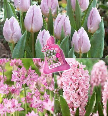 Tulipes roses, jacinthes et allium oase