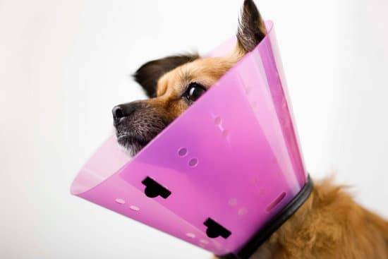 Dog Cone of Shame: How You Can Help Your Dog Adjust