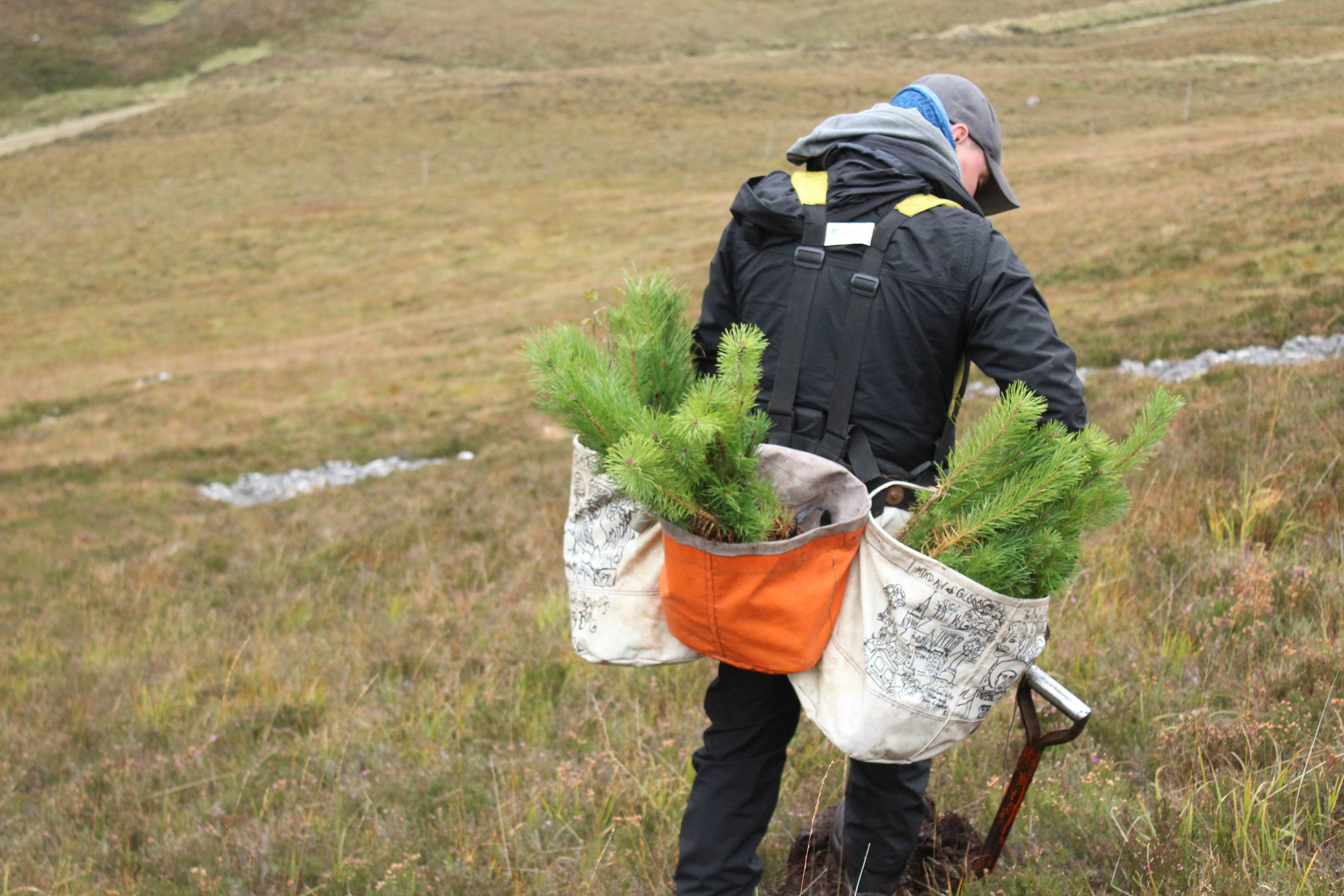 A tree planter carries bags of little pine saplings to be planted in the field