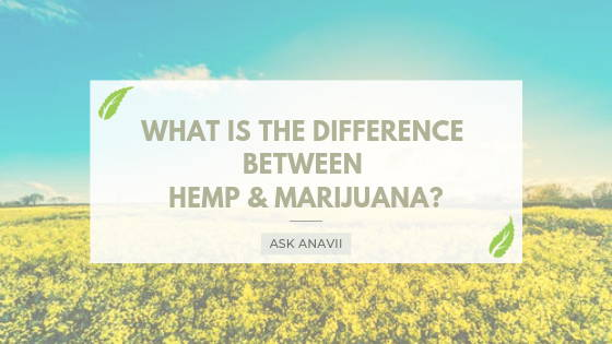 What Is The Difference Between Hemp and Marijuana?