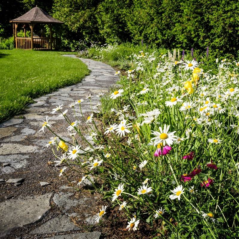 Wild flowers planted along a pathway in a garden
