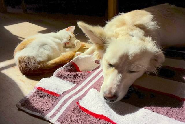 How to Support Your Pet During and After Cat Antibiotics and Dog Antibiotics
