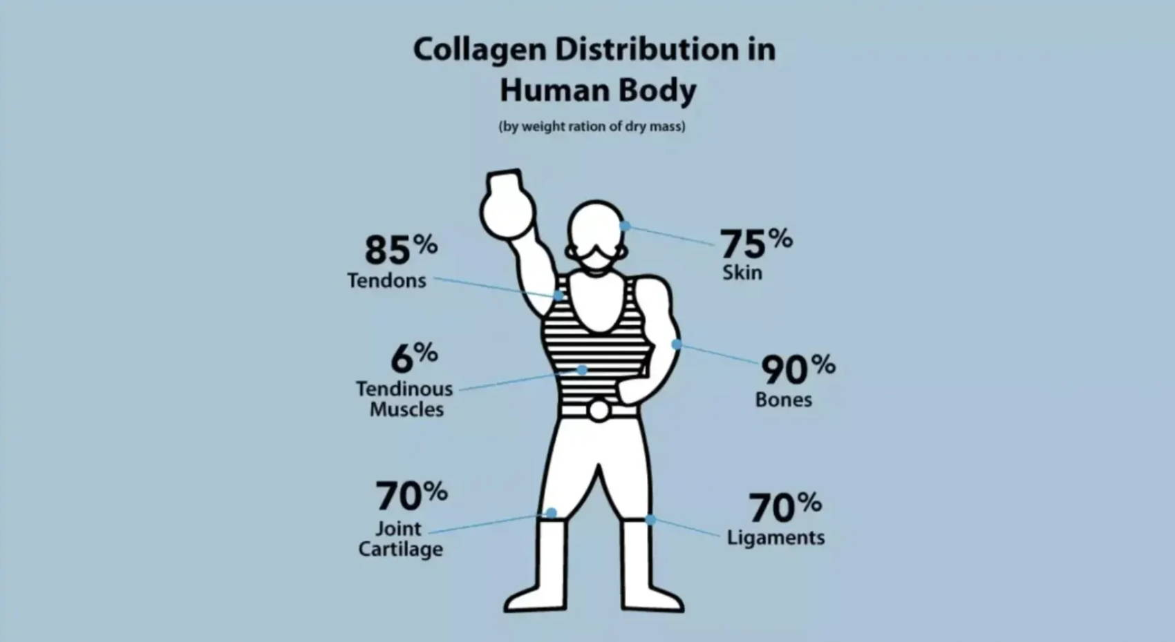 Collagen Distribution in The Human Body: Amandean 2018