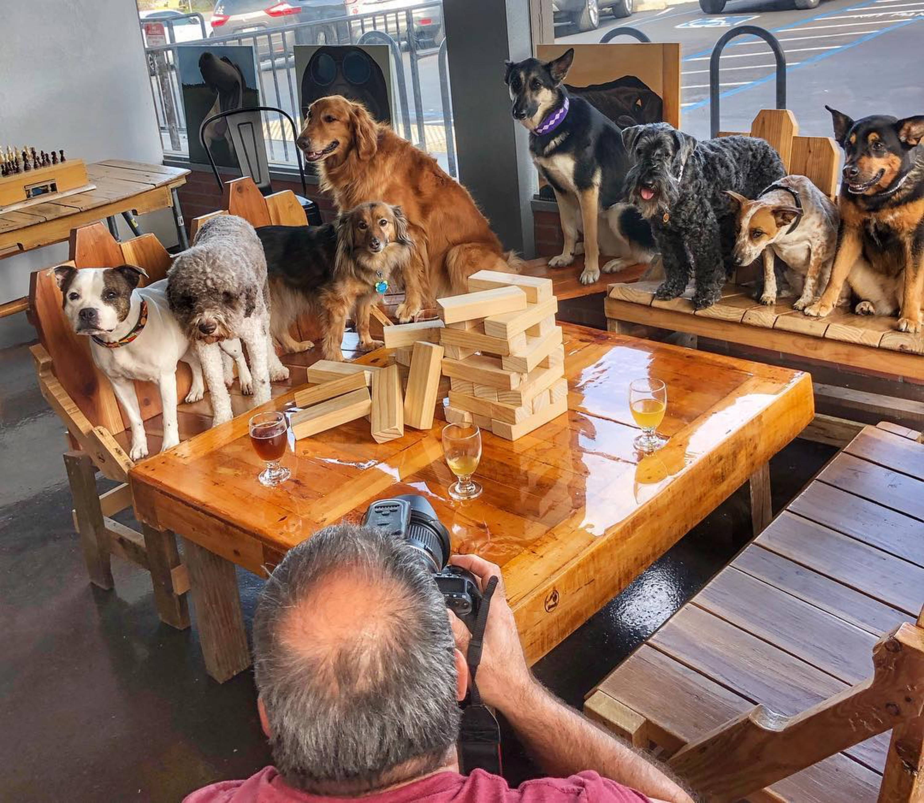7 dogs sitting in restaurant