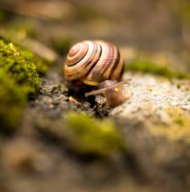 snail-art-of-going-slowly