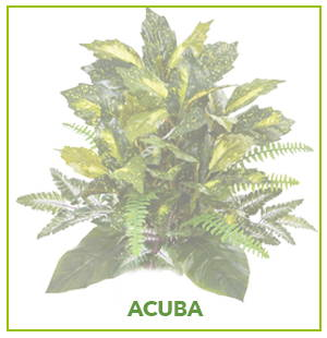 ARTIFICIAL ACUBA PLANTS