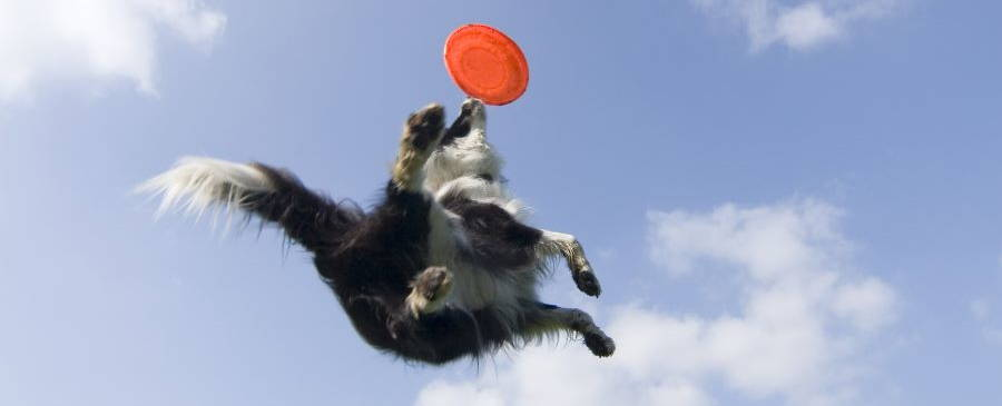 Jumping can put pressure on your dog's joints