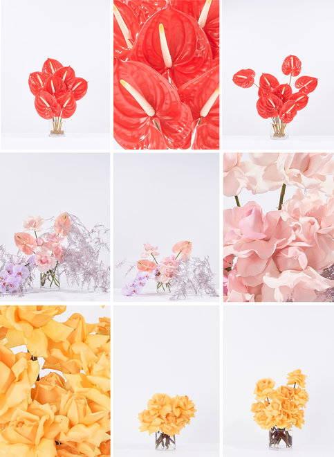 Explore FFT Floral