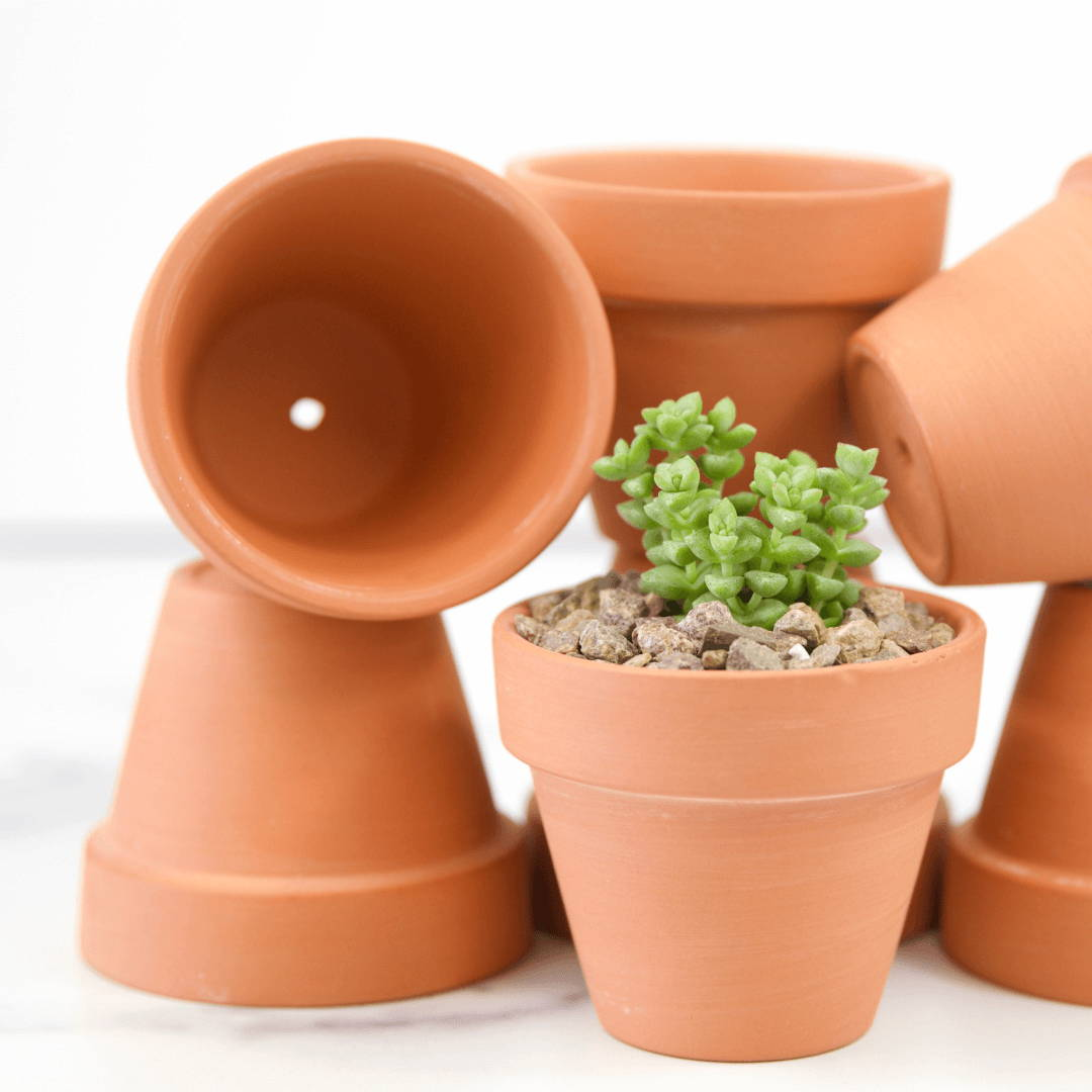 Pots and Containers for Succulents