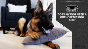 Does my dog need an orthopedic dog bed article