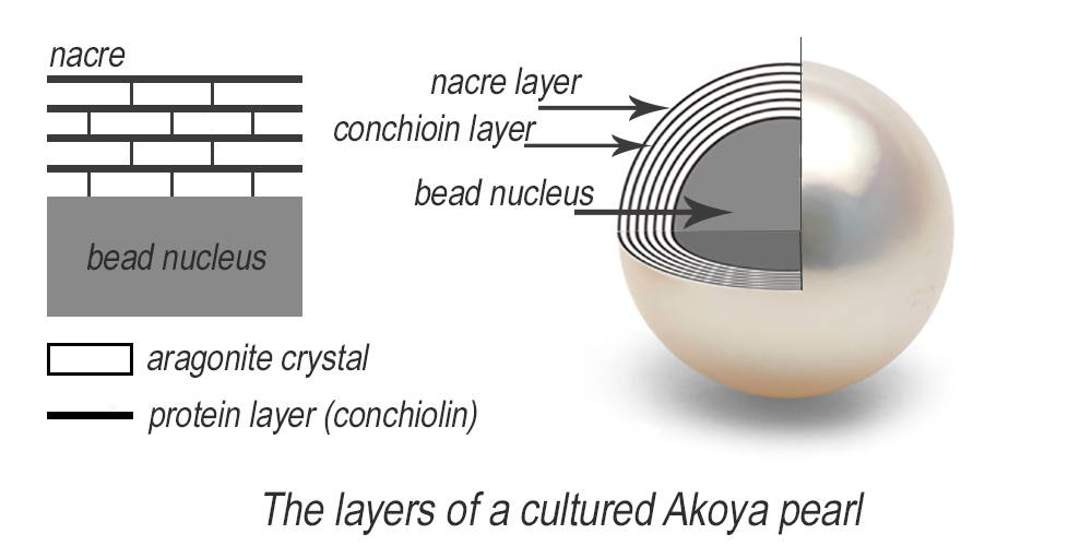 cross-section-pearl-nacre-layers-akoya