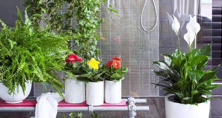 Kamerplant: Luchtzuiverende planten