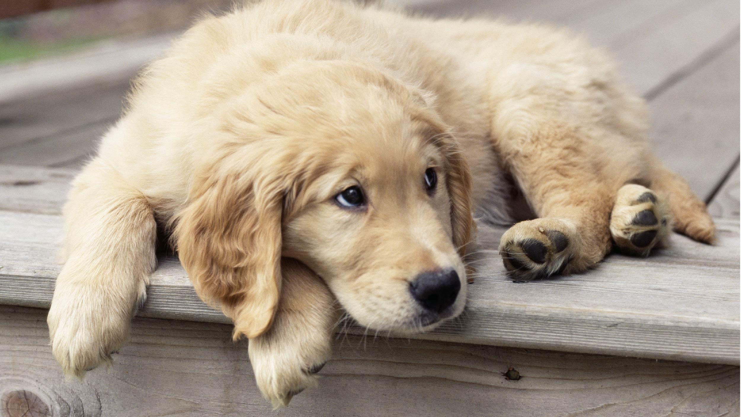 Dog not stimulated
