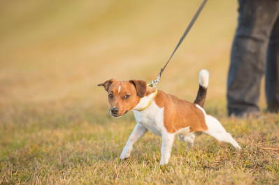 4 Great Ways To Stop Your Dog From Pulling On Their Leash - Team K9