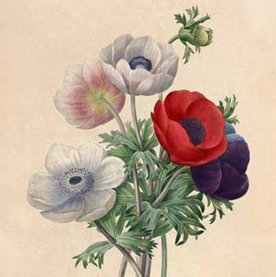 Botanical & Floral Art