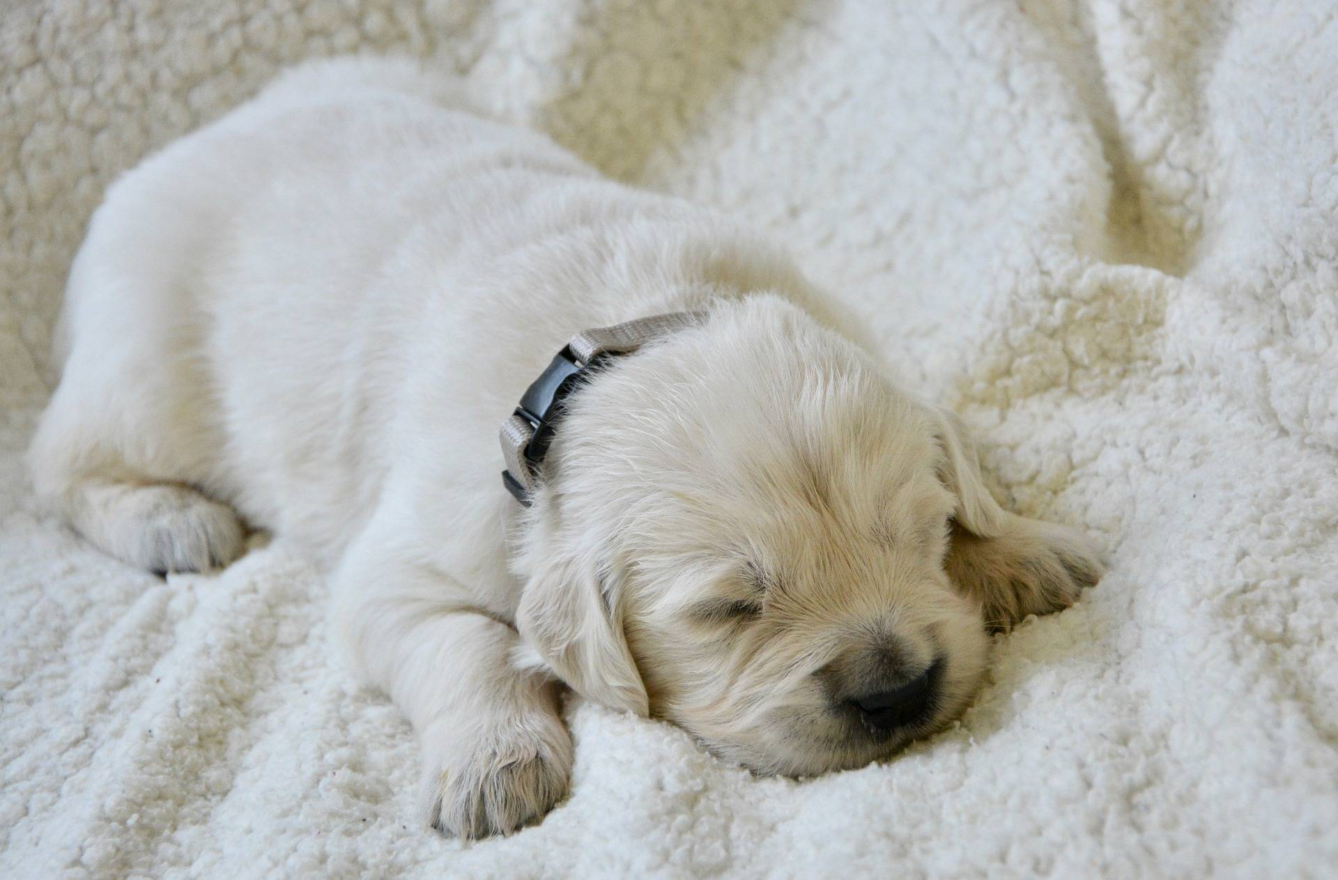 Checklist For New Puppy Owners Guide Pooch Mutt