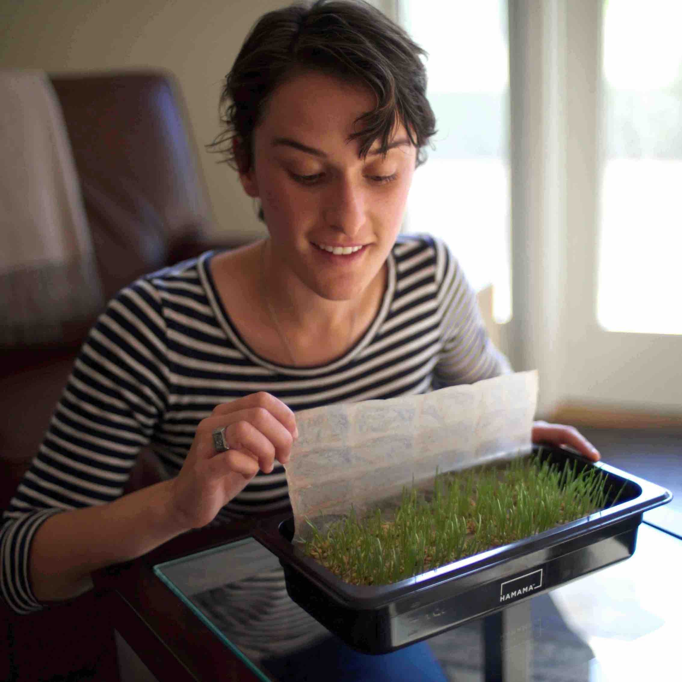 Woman showing how to grow wheatgrass in a wheatgrass kit at home.