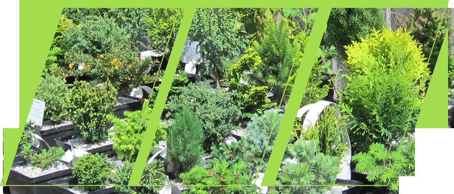 A beautiful garden full of plants