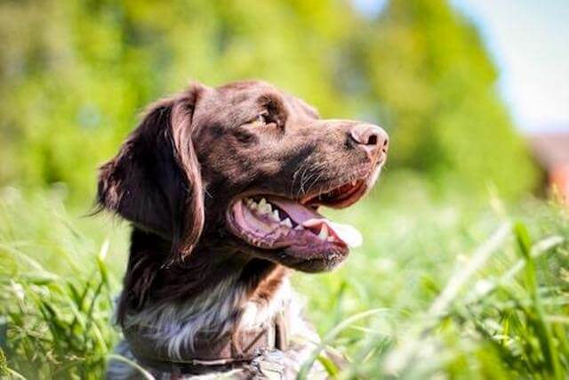 Fecal Transplants Can Help Dogs With Digestive Issues: AnimalBiome