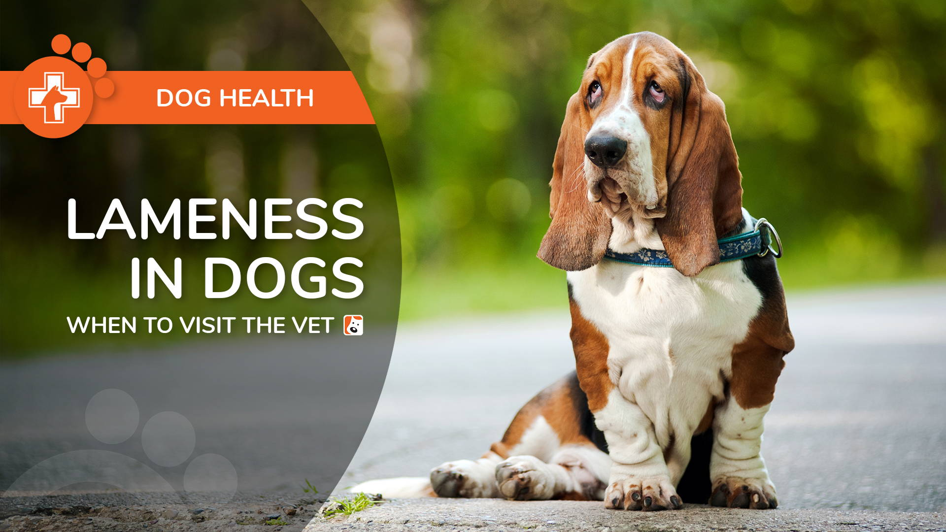 Lameness in Dogs: Causes and When To Visit the Vet