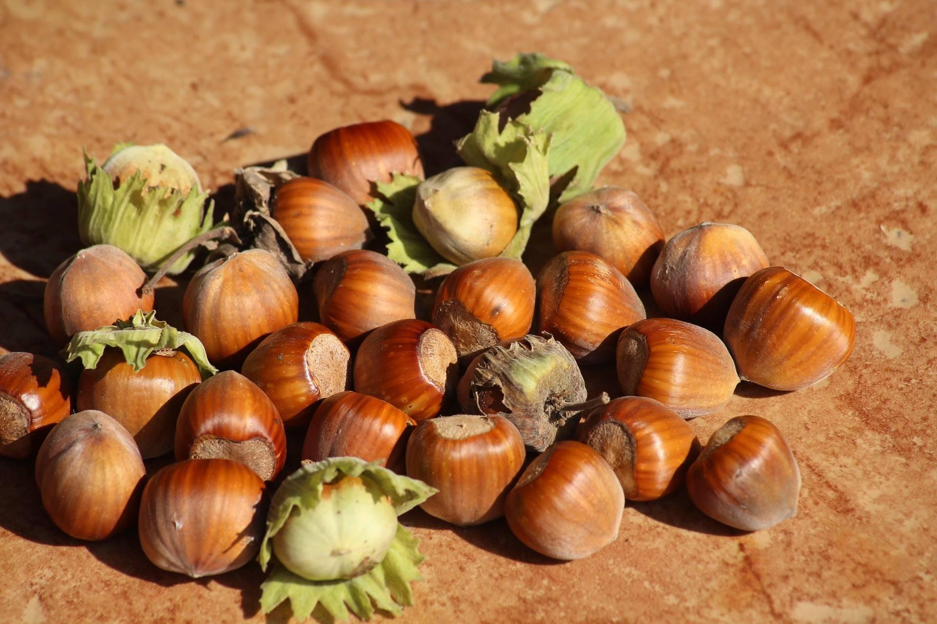As small as a hazelnut