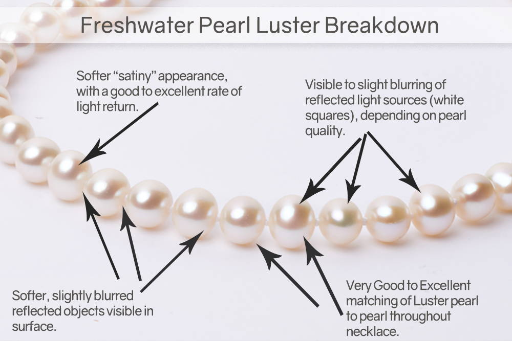 Examining Freshwsater Pearl Luster