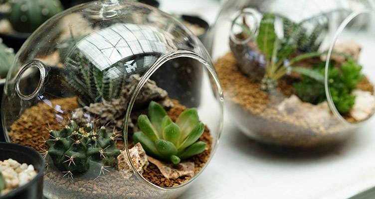 DIY terrarium végétal