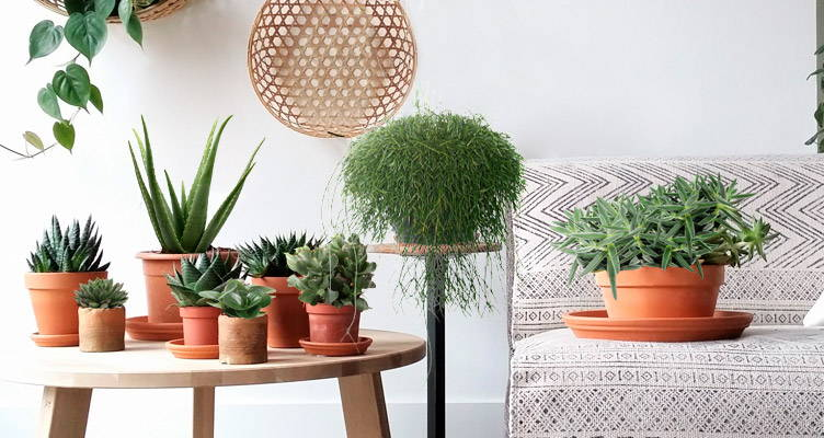 Il verde naturale più facile da curare per gli interni di ...