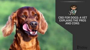 CBD For Dogs: A Vet Explains the Pros and Cons