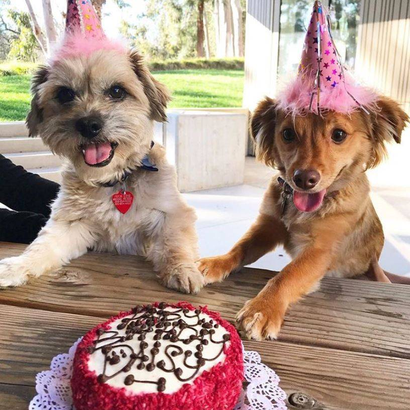 How Much Is A Dog Birthday Cake