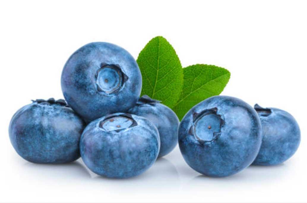 When To Fertilize Blueberries