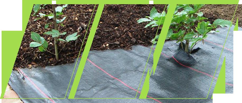 Garden using ecogardener landscape fabric