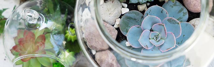 DIY: Succulent Mason Jar Terrariums - Ashley HomeStore - Canada
