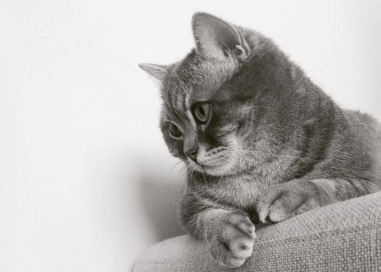 Fussy Cats