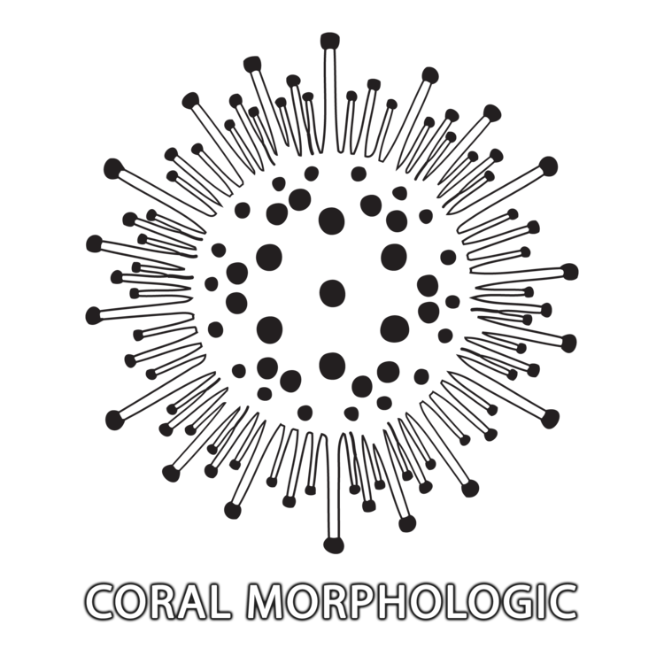 Coral Morphologic Logo