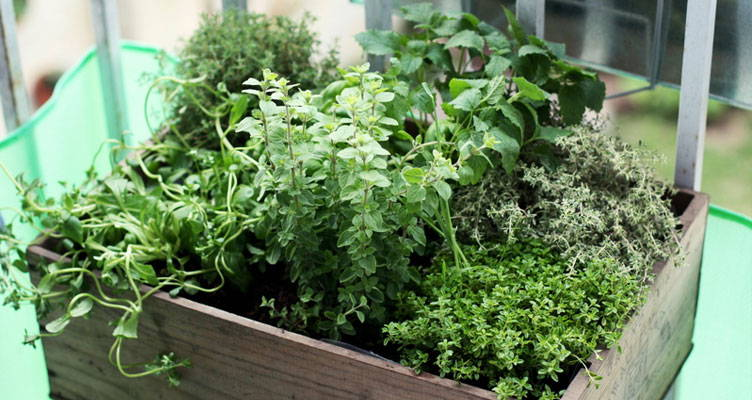 Herb garden on balcony