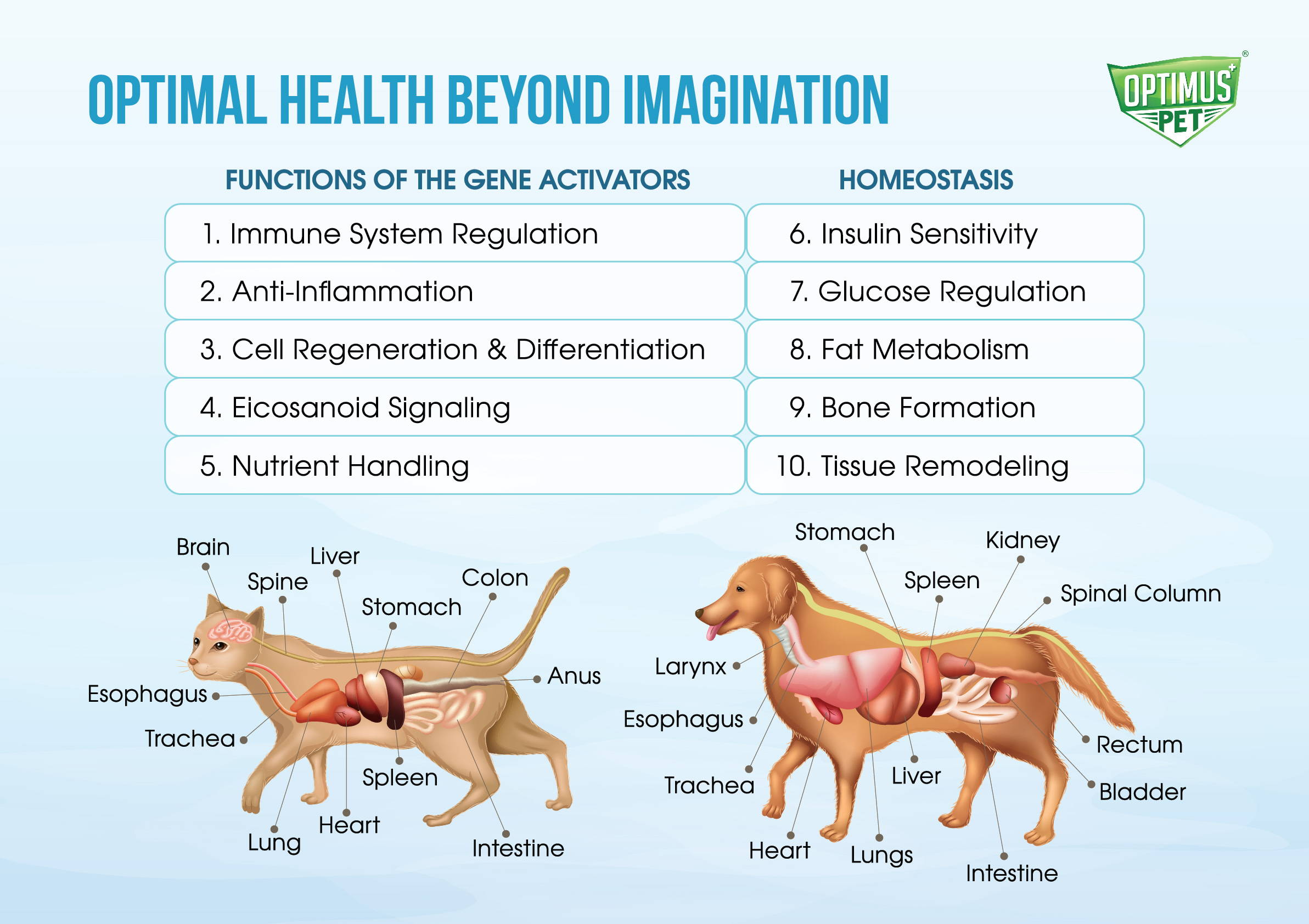 optimus pet gene activators and homeostasis functions