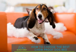 How to choose the best chew proof dog bed