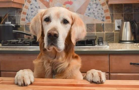 A golden retriever with his paws on the countertop