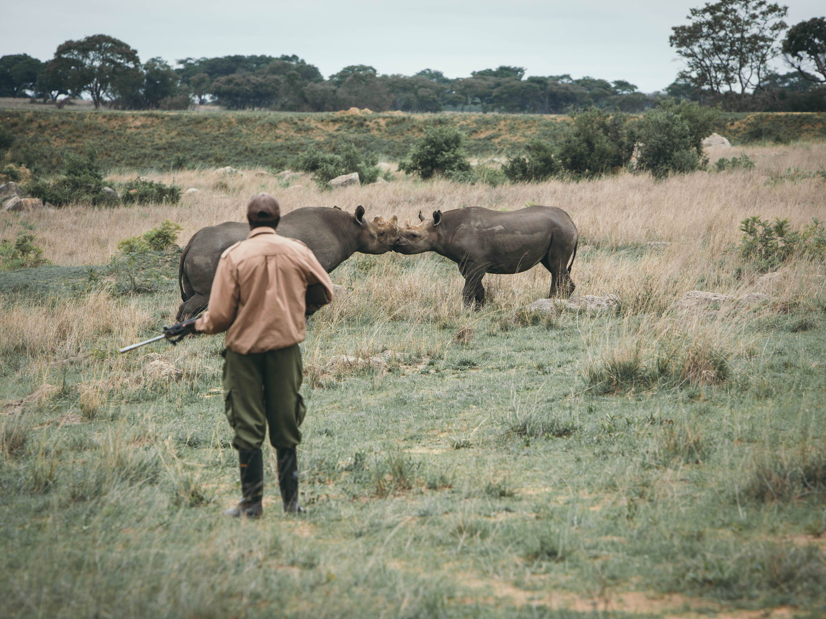 virtu growvirtu project kindness grow to inspire imire zimbabwe wildlife conservation save the rhino fence line protection of wildlife anti poaching stop poaching virtu bracelets bravery