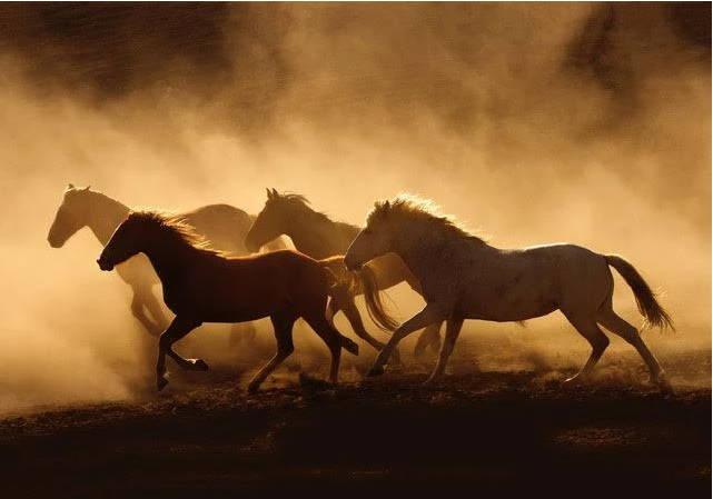 Photography class. Artist Workshop. Tony Stromberg. Equine Photography. Horse Photography.