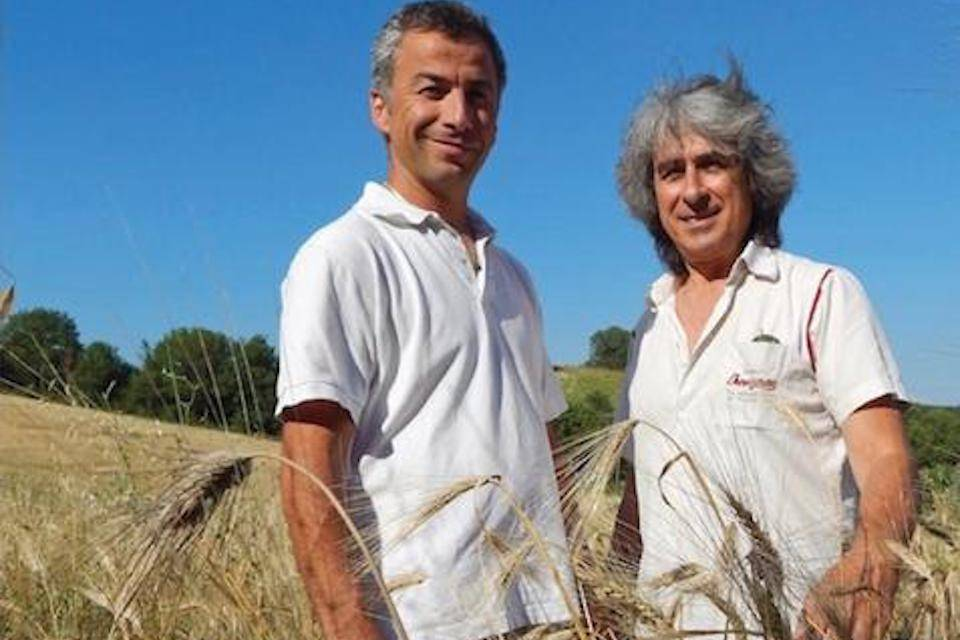 Bruno Vitaletti and Dino Paoletti in Le Marche Khorasan wheat field