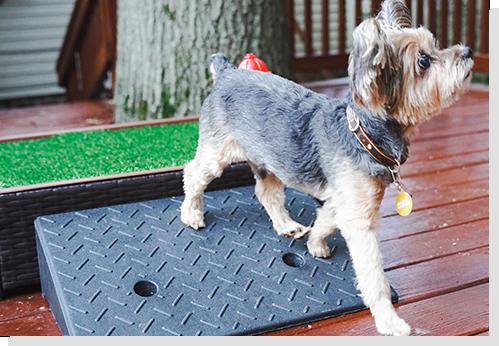 dog training pad