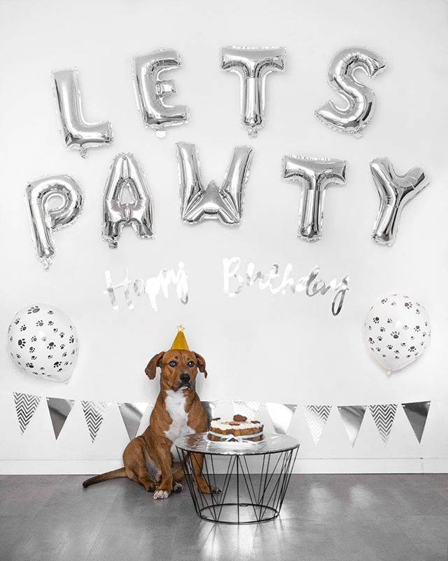 Easy Dog Birthday Decorations That Show