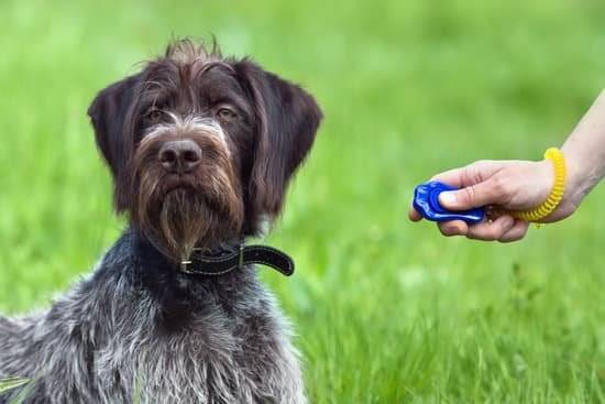 A dog sits in grass as its owner holds a clicker next to it