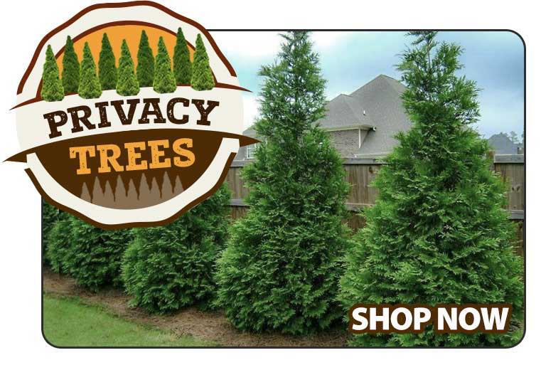 Shop Privacy Trees