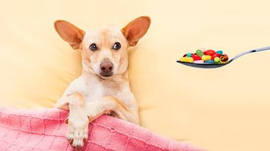 A tan dog laying in bed looking at a spoonful of supplements.