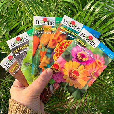 Shop Seeds