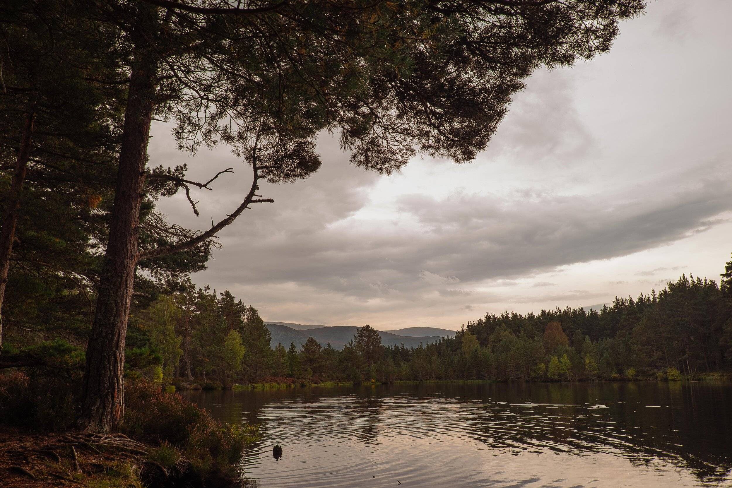 The black water of forest loch  surrounded by Scots pine and broadleaf trees