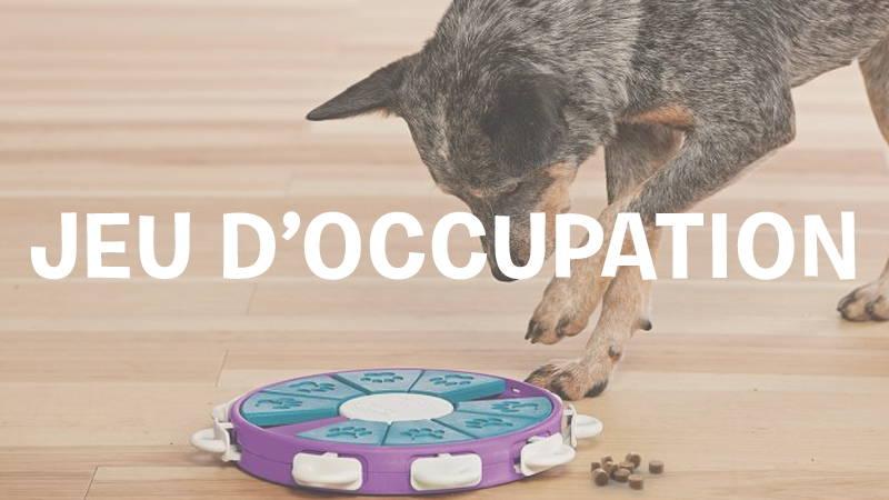 inooko-jouet-occupation-chien